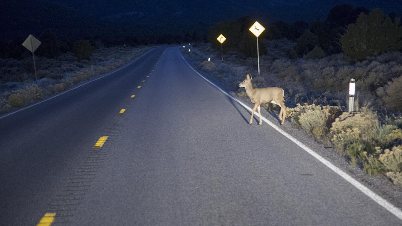 deer crossing highway in the dark