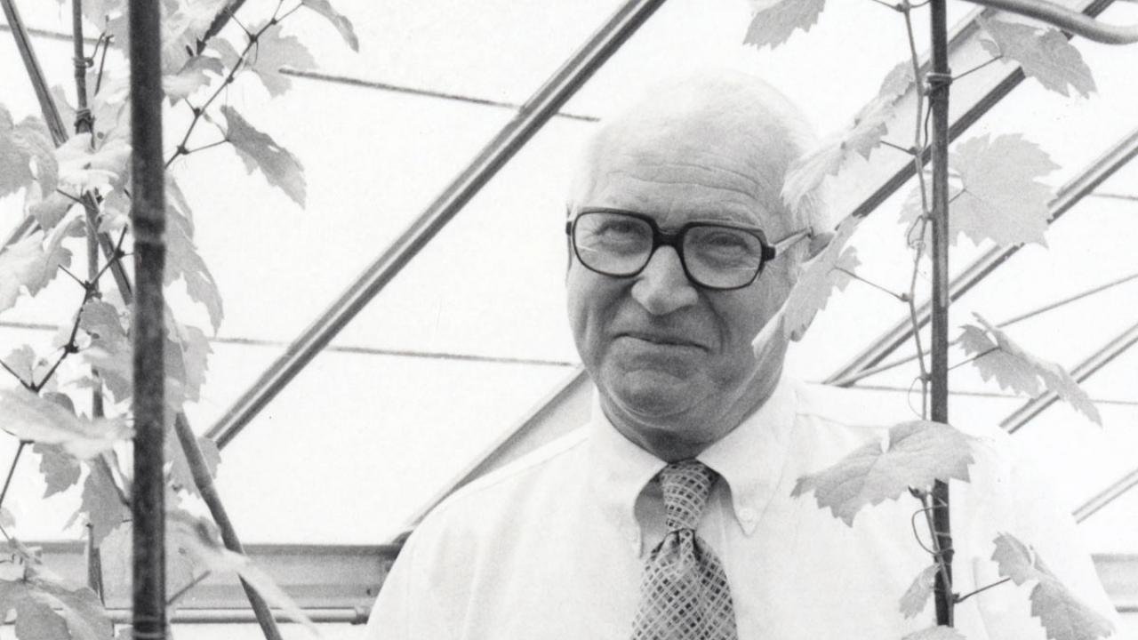 Harold Olmo with vine, black and white