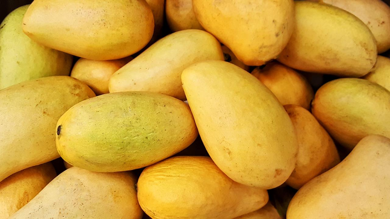 photo of honey mangoes