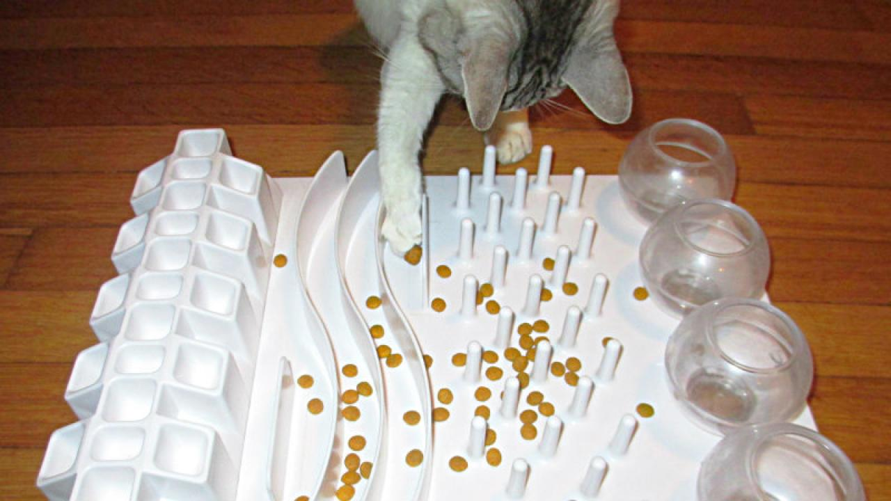cat using food puzzle