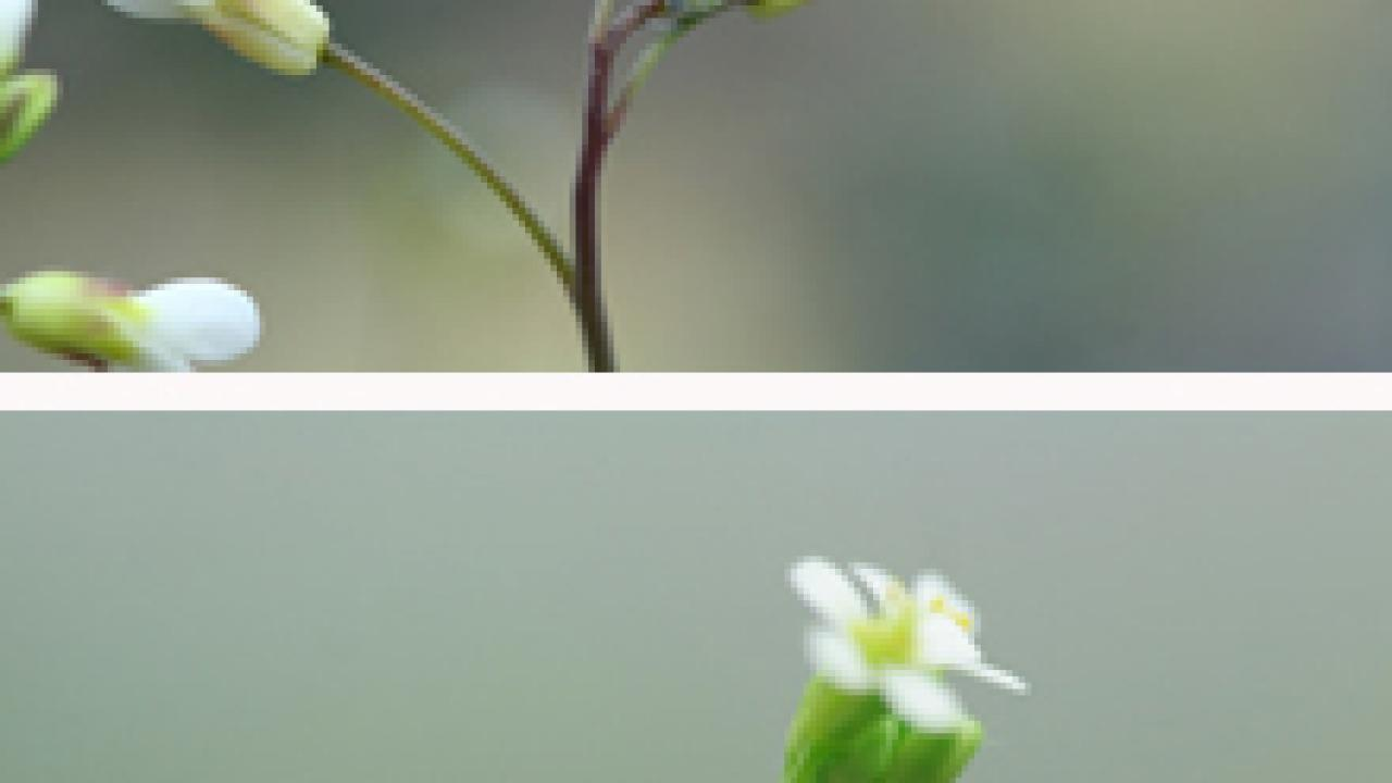 Two photos of flowers