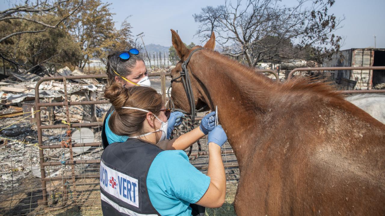 Veterinary Emergency Response Team members care for horse.