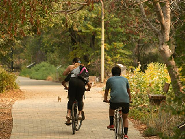 students bicycle together along the uc davis arboretum