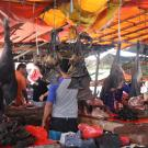 Bats hang from market in Indonesia