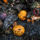 food waste rots