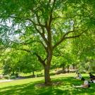 Students do art under a tree in park