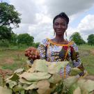 An African woman holds out a handful of brown shea nuts against a backdrop of tall trees, blue sky and white clouds.