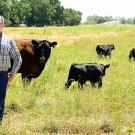 Man in plaid shirt and jeans stands in pasture with black cow and three calves