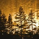 Wildfire burns behind an outline of trees in Trinity County in northern California in 2015.