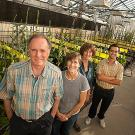 Four people standing in a greenhouse filled with lettuce plants