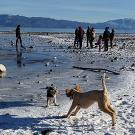 A winter Tahoe beach with snow with two dogs playing and people int he background near the water