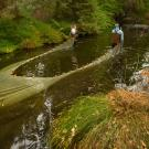 three students work to pull of the fish trap during a carp research project in the west end of Arboretum Waterway