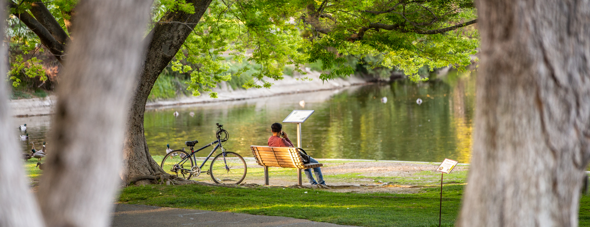 a student sitting on a bench in front of Lake Spafford talking on a mobile phone