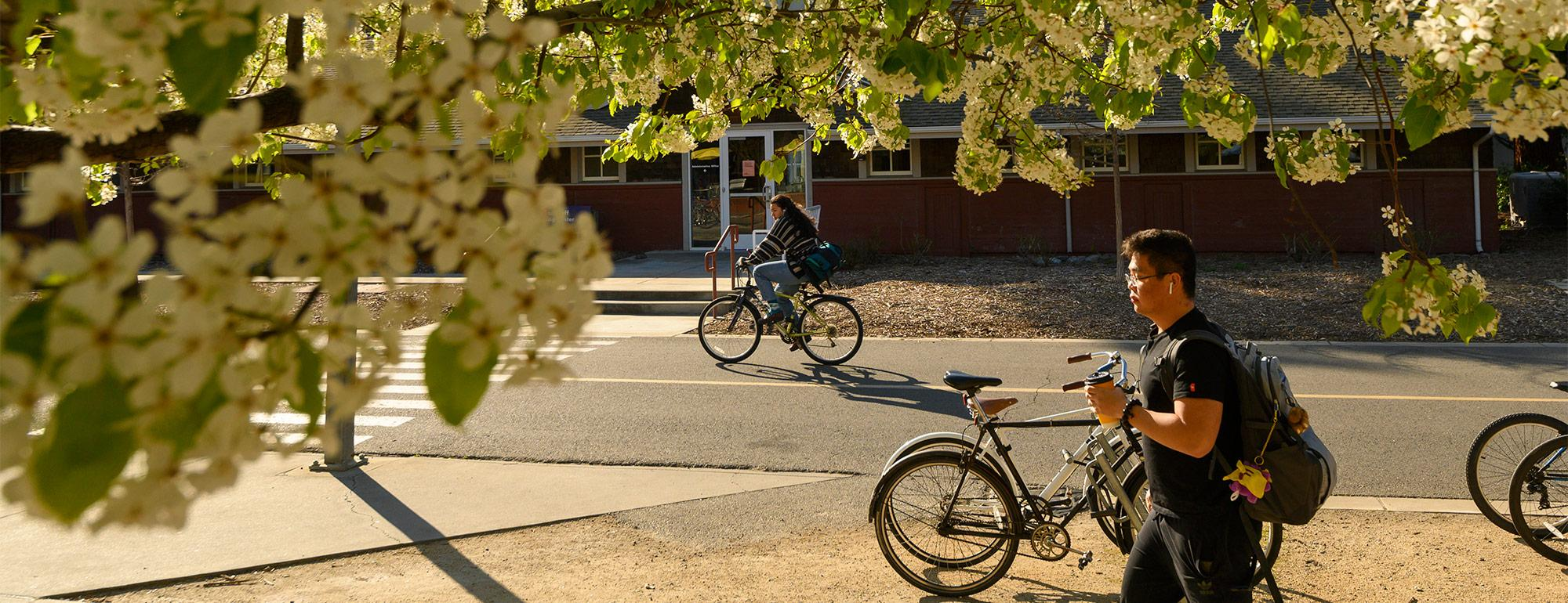 a student walking on campus near some flowering trees and a person on a bike in the background
