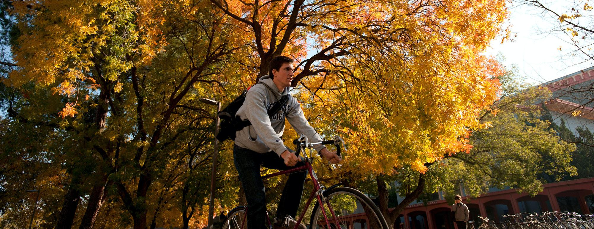 A male uc davis student rides his bike under autumn leaves