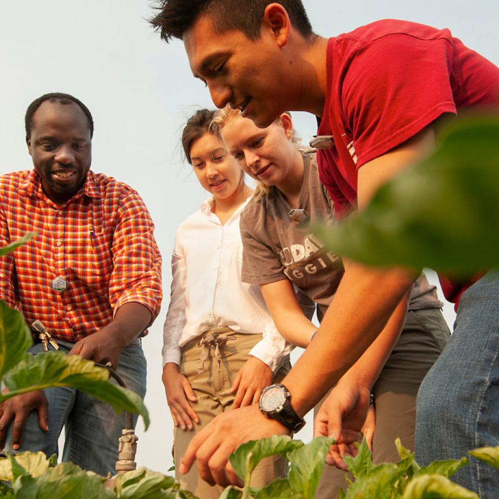 A professor gathers students to inspect crops