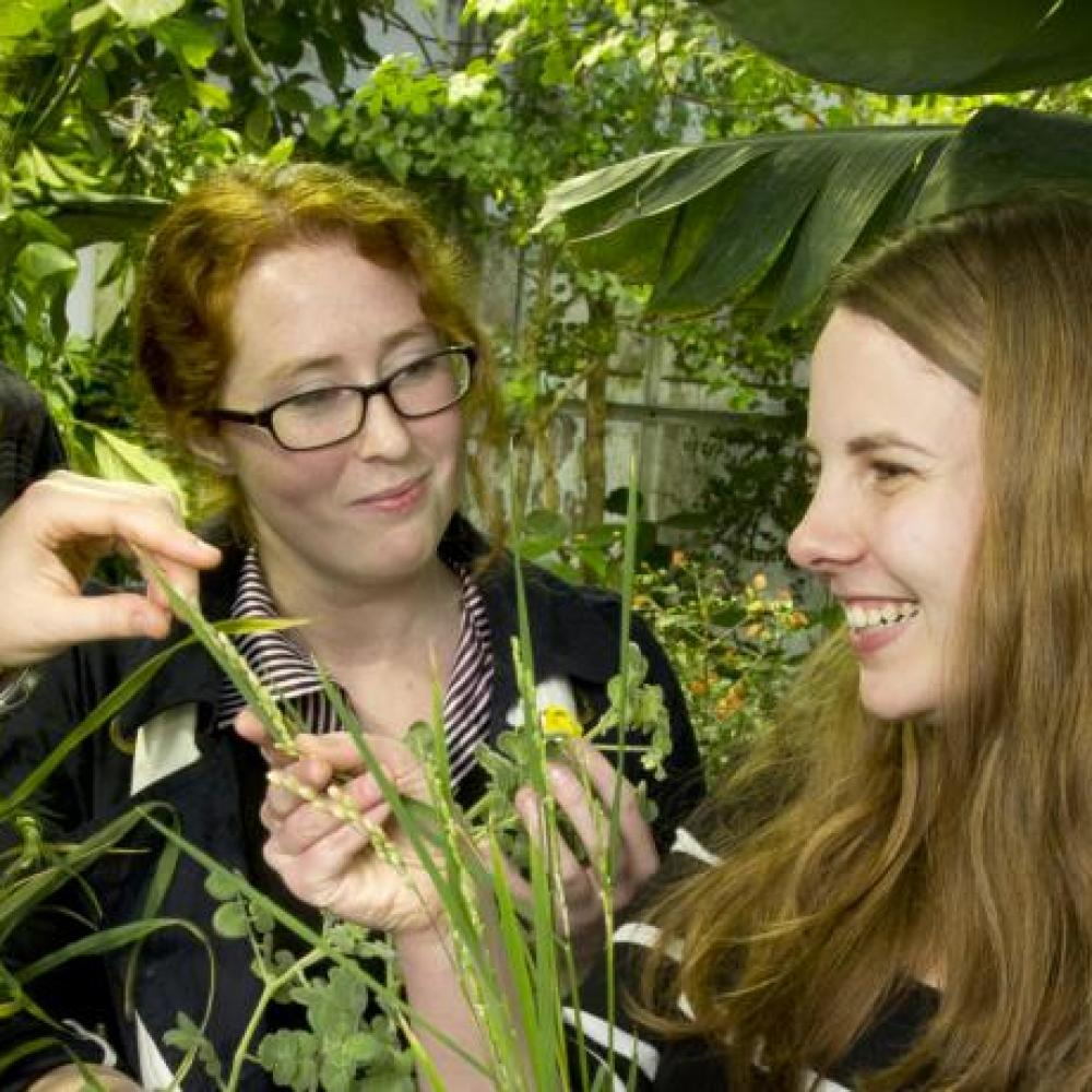 environmental horticulture and urban forestry students stand among plants