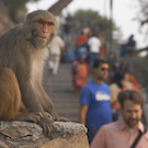 monkey in urban setting