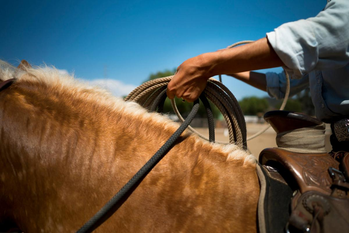 female hand holding lariat and reins while riding a saddled horse