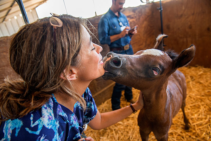 Veterinary neurologist Monica Aleman kisses a baby horse.