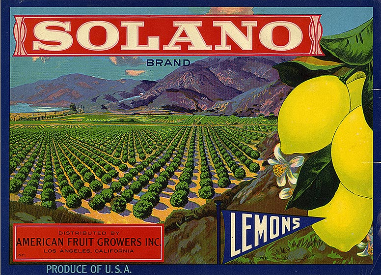 Bucolic drawing of lemon groves and a lemon