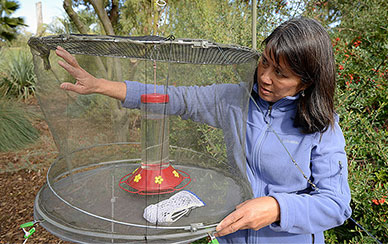 Lisa Tell reaching in a netted cage for a hummingbird.