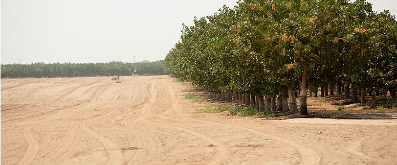 Photo of a California farm with dry land and browning orchard