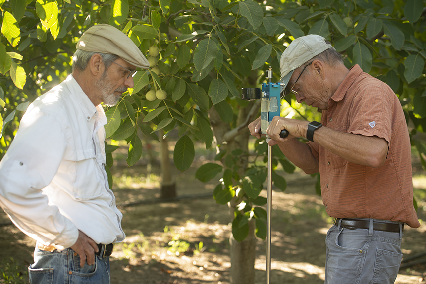 photo of researchers in walnut orchard