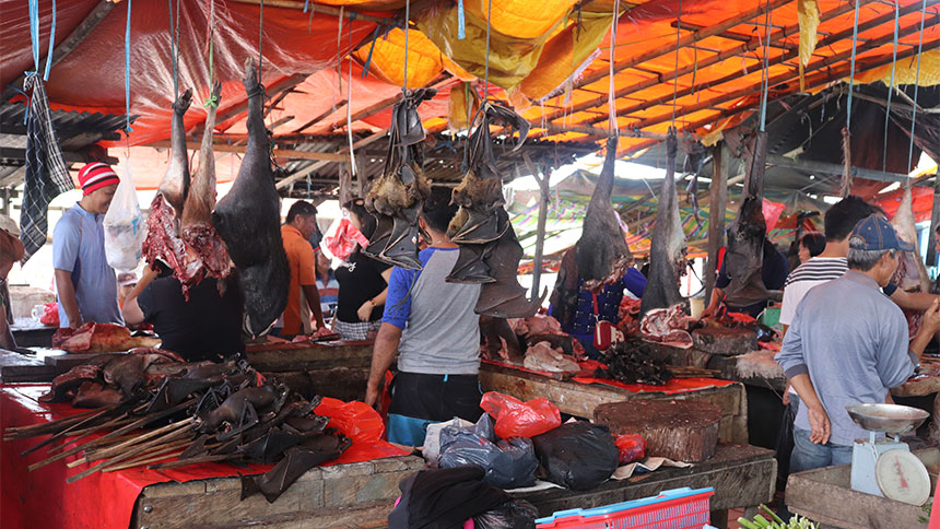 Bats for sale in Indonesian marketplace
