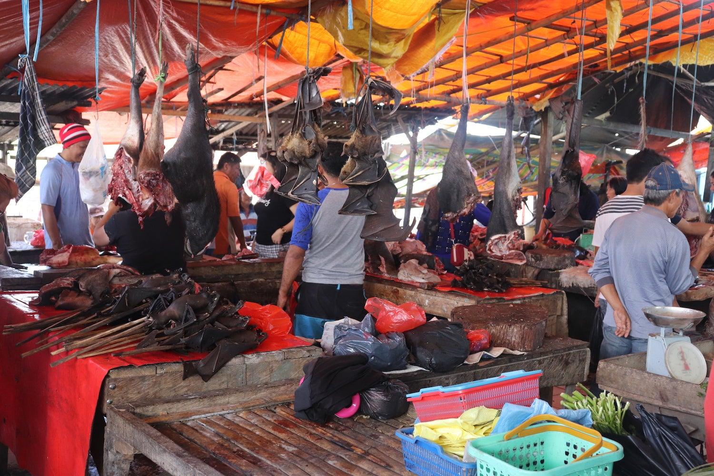 Bats in wildlife market in Indonesia