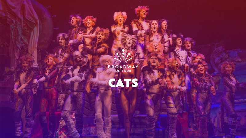 "The cast of ""Cats"" posing on stage."