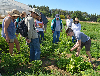 A student demonstrates to volunteers how to harvest produce