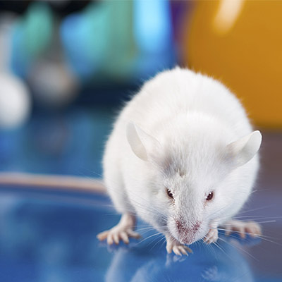Mouse on reflective surface