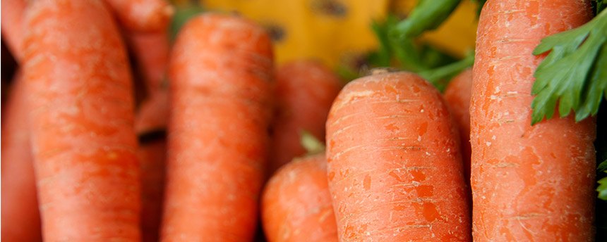 A bunch of fresh fresh carrots