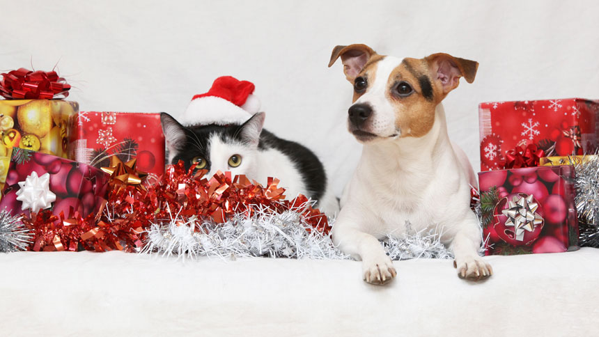 Dog and cat at the holidays
