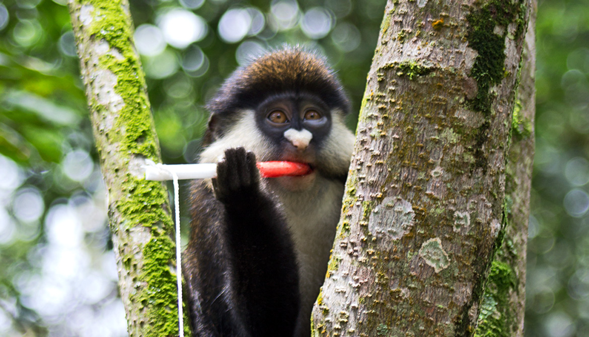 primate with jam-coated rope