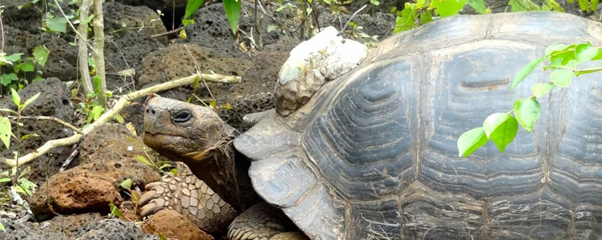 tortoise with GPS