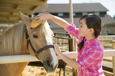 A student care taker brushes the mane of a horse at the UC Davis Equestrian Center