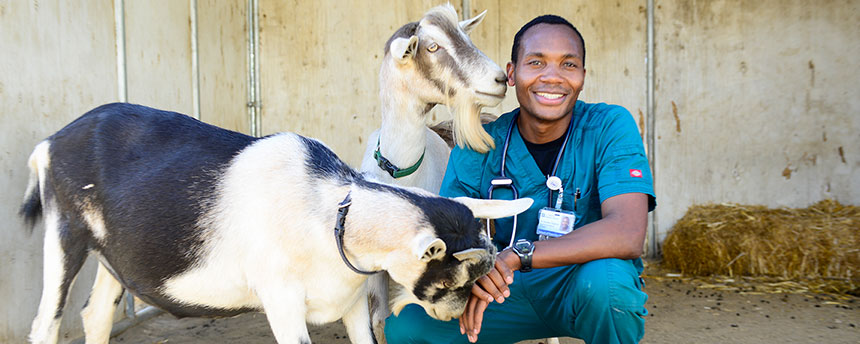 Man in medical scrubs with two goats